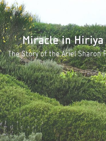 Miracle in Hirija